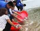 Sinh viên ĐH Vinh thả hơn 1 tạ cá giống xuống sông Lam