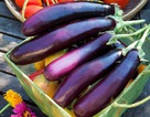 9 lợi ích không ngờ của cà tím
