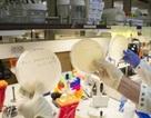 Phát hiện khả năng thích nghi của virus trong quá trình tiến hóa