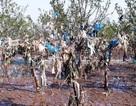 Kinh hãi rác thải quấn chặt cây rừng phòng hộ ven biển