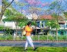 Có một Sài Gòn mộng mơ mùa hoa kèn hồng nở rộ