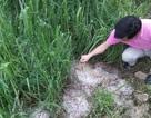 Mưa đá dội xuống Cao Bằng gây thiệt hại gần 7 tỷ đồng