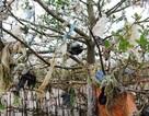 Kinh hãi cảnh tượng rừng bần bị bức tử bởi rác thải tấn công!
