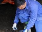 Chỉ nuôi giun Nhật, lãi 80-100 triệu đồng mỗi tháng