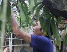 Ngắm vườn lan rừng tiền tỷ của cử nhân bỏ phố về quê làm nông dân