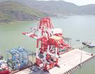 Cảng Quy Nhơn sau cổ phần hoá: Lãi tăng, thu nhập tốt