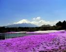 Tháng 5 Nhật Bản: Một hành trình - hai mùa hoa