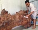Khó tin: Khúc gỗ sưa cổ 1,5 tỷ đồng, cây lộc vừng mang bầu 7 tỷ đồng