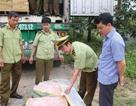 Bắt giữ xe container chở 5 tấn nầm lợn ngoại không giấy tờ