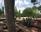 Bộ Công an đang vây bắt vụ phá rừng lớn tại Vườn quốc gia Yok Đôn