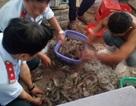 Bơm tạp chất vào tôm nguyên liệu bị phạt hơn 185 triệu đồng