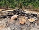 Triệu tập đối tượng nghi phá rừng lên làm việc