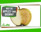 Tại sao miếng táo chuyển sang màu nâu khi vừa bổ ra?