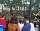 """Hà Nội: """"Nghẹt thở"""" chen chân đưa con đi chơi vườn thú Thủ Lệ"""