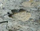 Dấu chân loài khủng long lớn nhất thế giới vừa được tìm thấy cách đây 170 triệu năm