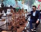"""Choáng ngợp bộ sưu tập chim """"khủng"""" giá 10 tỷ đồng của """"vua chim màu Việt Nam"""""""