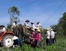 """Giá dưa hấu đạt tới 7.000 đồng, nông dân sợ lặp lại câu chuyện """"giải cứu"""""""