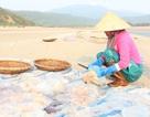 Ngư dân hối hả hái vào vụ thu hoạch sứa biển