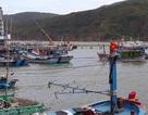 """Yêu cầu cảng hàng dừng đổ đất lấn biển """"uy hiếp"""" cảng cá tại Bình Định!"""