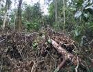 Những cánh rừng bị tàn phá: Yêu cầu kiểm điểm hàng loạt cán bộ