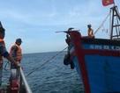 Ngăn chặn tàu giã cào khai thác hải sản trái phép trên biển