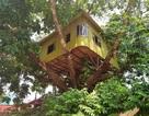 """Độc đáo ngôi nhà """"cheo leo"""" trên ngọn cây ở Ninh Bình"""