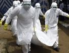 Ebola lại bùng phát, WHO và Congo gấp rút đối phó