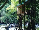 """Khó tin với những ngôi nhà """"treo mình trên cây"""" độc nhất Việt Nam"""