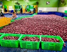 MM Mega Market Việt Nam xuất khẩu thành công nông sản Việt sang hệ thống Big C Thái Lan