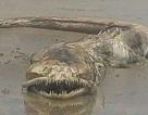 Sinh vật bí ẩn có răng sắc nhọn dạt vào bờ biển Mexico