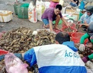 Hỗ trợ hơn 18 tỷ đồng cho người nuôi tôm hùm bị chết hàng loạt