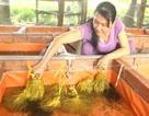 Thu nhập25-30 triệu/tháng từ nuôi lươn không bùn