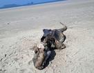 Xác sinh vật kỳ dị trôi dạt vào bờ biển