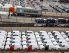 Mỹ điều tra ô tô nhập khẩu, thuế có thể tăng