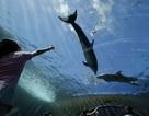 Điều gì mang lại hạnh phúc cho cá heo?