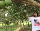 Hè đến rủ nhau về Đồng Nai ghé thăm làng bưởi xanh mướt mát