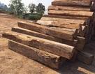 Nghi vấn một thanh niên bị gỗ đè chết trong rừng