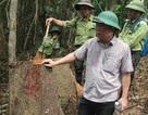 Hạt trưởng kiểm lâm mất chức vì để mất rừng