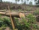 Vụ một thửa đất giao hai chủ hộ ở Hà Tĩnh: Huyện, xã đã làm tròn trách nhiệm?