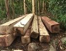 """Vụ phá rừng khủng: """"Tuần tra hàng ngày"""" vẫn mất gần 36m3 gỗ"""