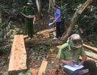 Một tháng xảy ra 200 vụ phá rừng trên cả nước