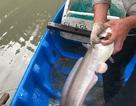 Thu bạc triệu mỗi đêm bằng nghề câu cá ngát ở Sài Gòn