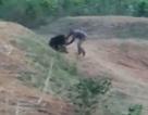 Cố chụp ảnh với gấu, người đàn ông tự chuốc lấy một kết cục đau đớn