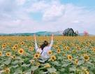 """Phát """"sốt"""" với cánh đồng hoa hướng dương """"khổng lồ"""" ngay gần Hà Nội"""