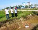 Cá chết rải rác quanh khu công nghiệp mới xây dựng