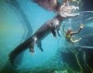 """Cầu hôn bạn gái trong """"lồng tử thần"""" với đàn cá sấu khổng lồ vây quanh"""