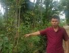 Tuyên Quang: Hai kết luận kỳ lạ trong một vụ án