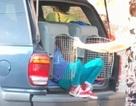 Bà nhốt 2 cháu trong cũi chó dưới cái nắng 35 độ C