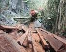 Tạo kẽ hở cho chặt phá rừng, làm nhà vào đất rừng