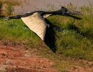 Phát lộ dấu vết bầy đàn khủng long sống cách đây 120 triệu năm